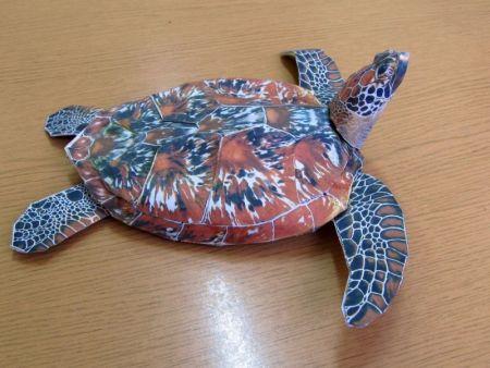 żółw i papuga - aktualizacja