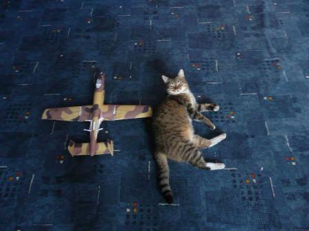 AMERYKAŃSKI SAMOLOT SZTURMOWY A-10 THUNDERBOLT II